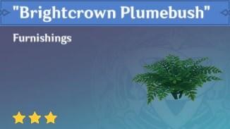 Brightcrown Plumebush