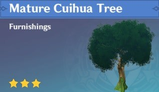 Furnishing Mature Cuihua Tree