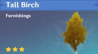 Furnishing Tall Birch